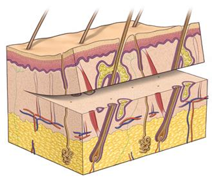 Reconstuctive Surgery 1