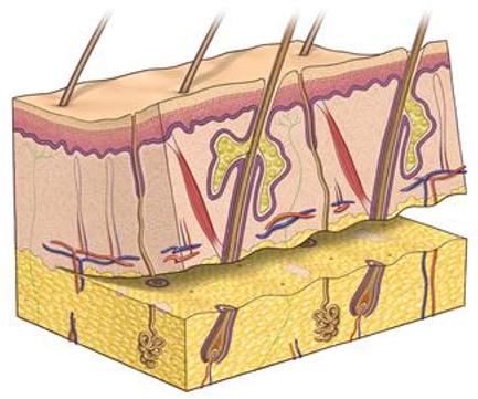 Reconstuctive Surgery 2